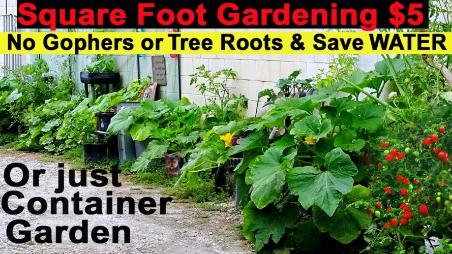 Growing RAISED BED Garden EASY Grows Tons of Food 🍅 Container Gardening Keeps Gophers & Roots OUT