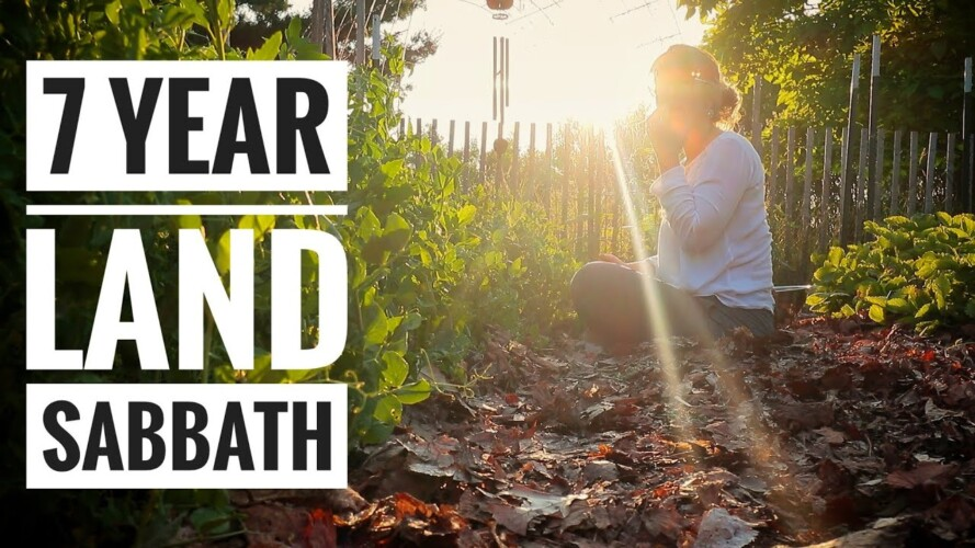 Why I'm Not Gardening | The 7 Year Land Rest