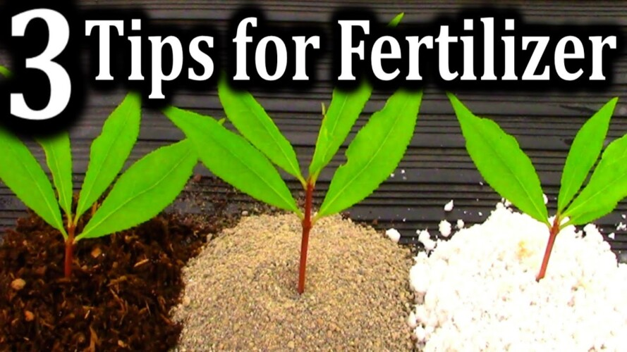 The BEST Fertilizer for Different Gardening Situations | How I Fertilize All of My Plants