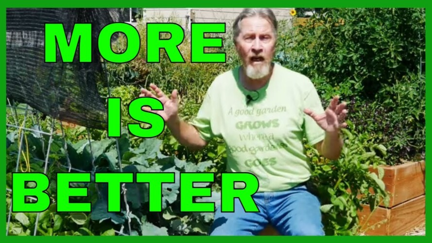 Polyculture - SECRET to Gardening Success
