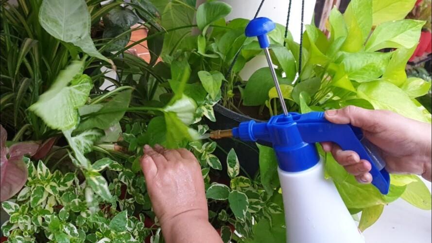How to Fertilize Plants in Rainy Season / Monsoon || Fun Gardening
