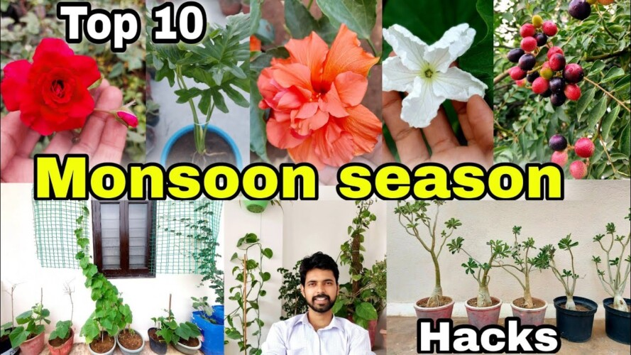 10 Easy Gardening Hacks for Beginners/Pro | Tips to grow plants
