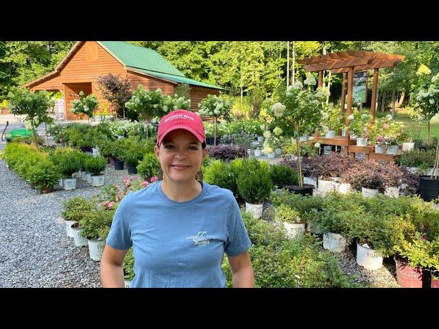 Weekly Nursery Tour in Full Bloom | Gardening with Creekside