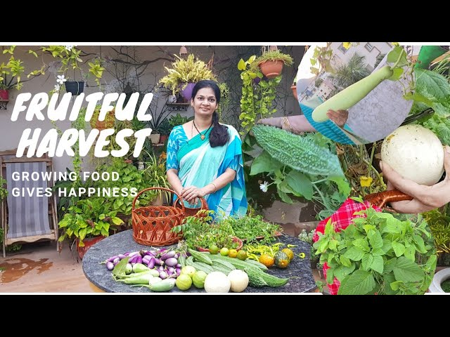 Harvests are happiness 😀ఆకుకూరలు ,పళ్ళు ,కూరగాయలు... #madgardener  #VegetableGardening  #gardening
