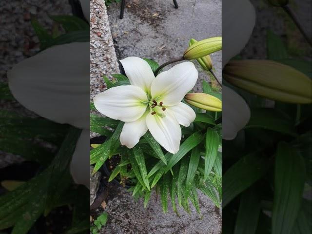 Blooming Garden..Nature at Best #homegarden #gardening #deepsallinonechannel