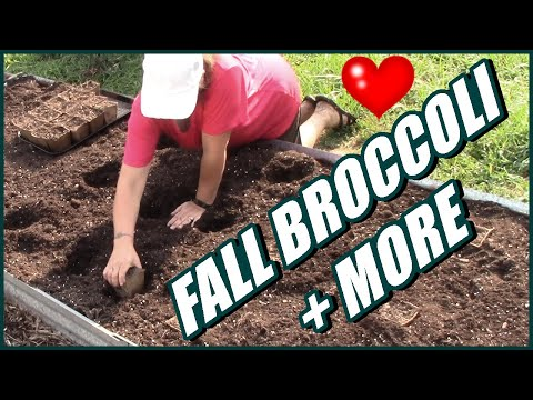 How To Plant Fall Broccoli And More | Raised Bed Gardening