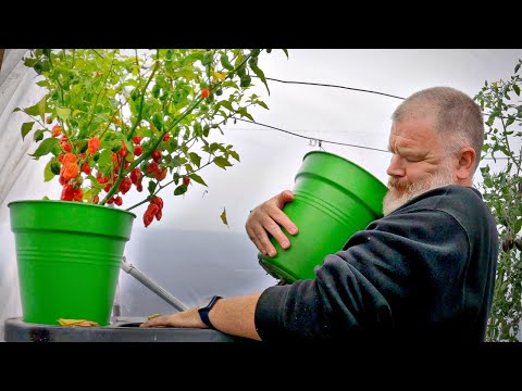 This Garden Is A Bloody Eyesore | Allotment Gardening With Tony