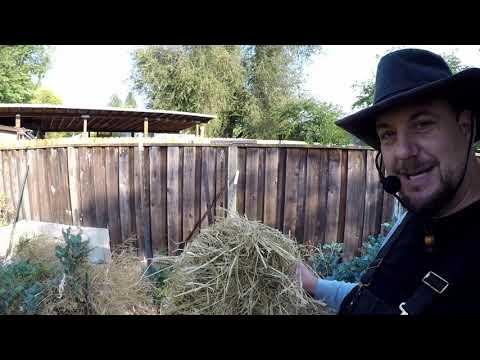 This Gardening Secret Will Help You Grow A Very Abundant Healthy Garden!!