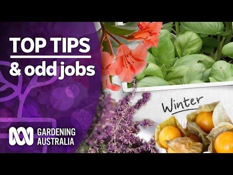 Top Tips | Jobs for the Weekend  | Gardening Australia