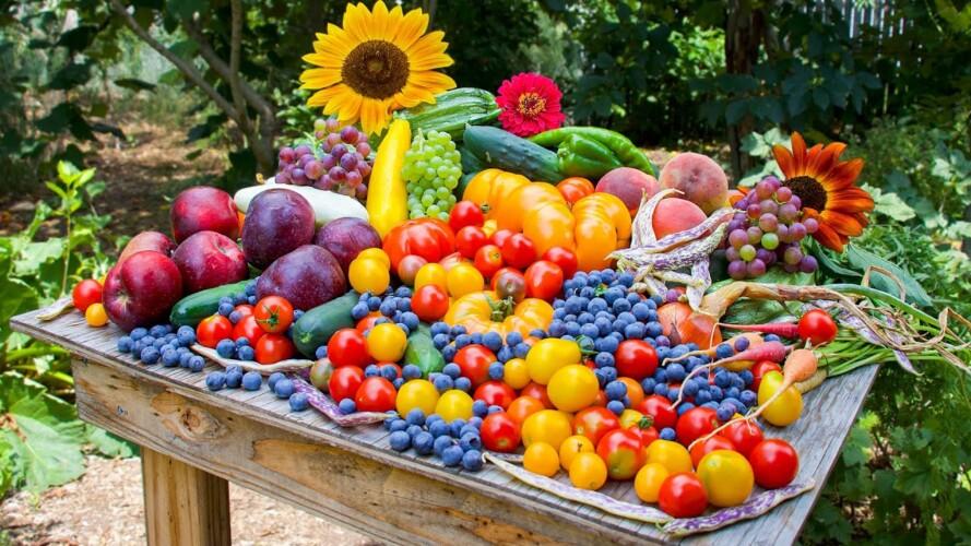 Stunning Backyard Gardening Harvest, Sustainable Permaculture Garden in a Suburban Neighborhood
