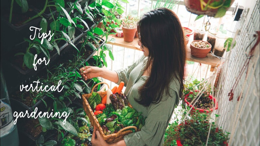 Sub) 4 Gardening Tips for Beginner | My first harvest in the small Vertical Garden on the Balcony