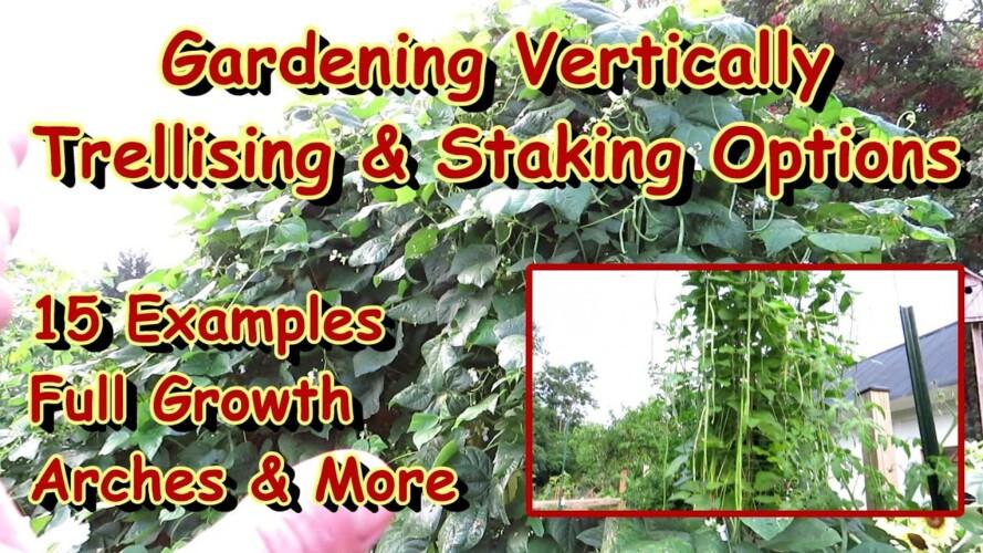 15 Vertical Gardening 'Staking & Trellising' Options: Full Plant Growth Examples on Trellises