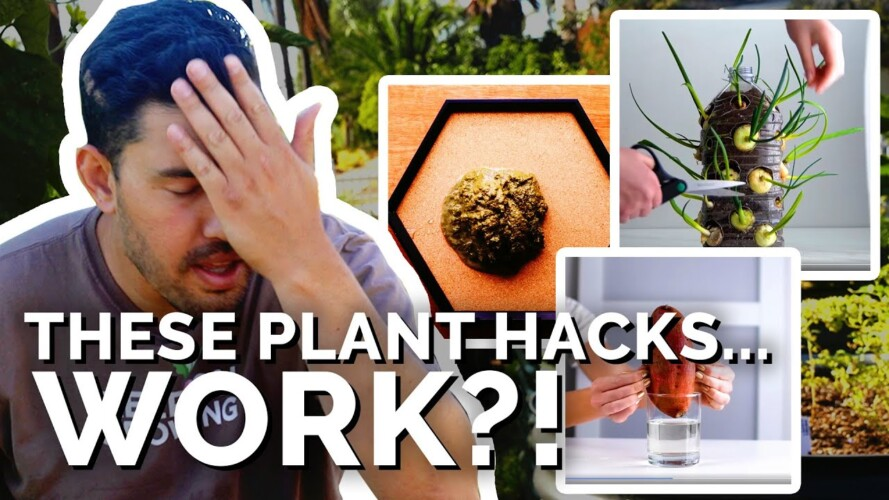 """Gardener Reacts to """"Plant Hacks"""" That...Actually Work?!"""