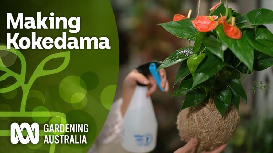 How to make a Kokedama | Indoor plants | Gardening Australia