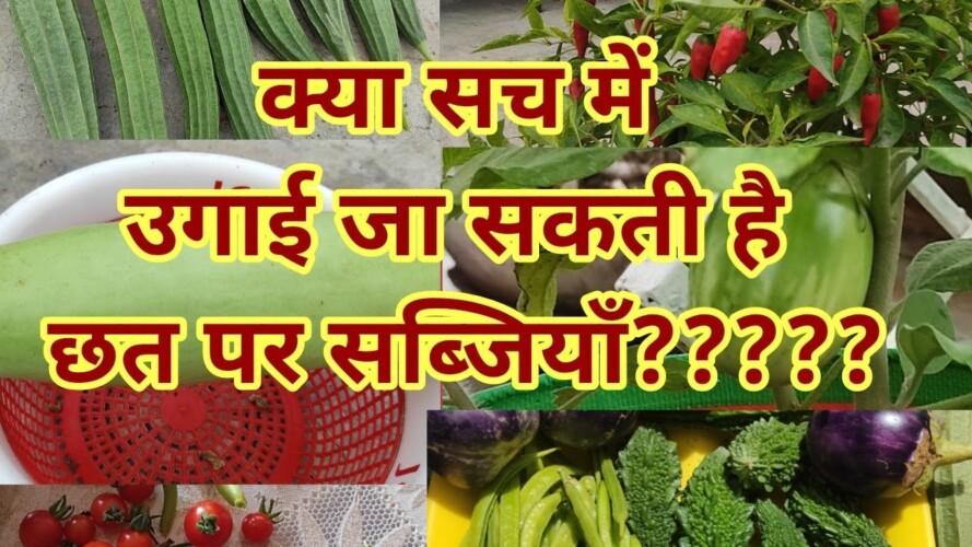 Grow organic vegetables at home . Do terrace gardening