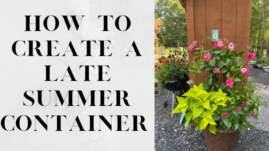 How To Create a Late Summer Container | Gardening with Creekside