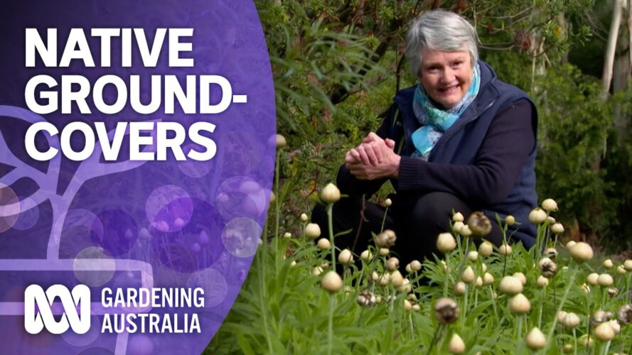 The best native groundcover plants for your garden | Australian native plants | Gardening Australia