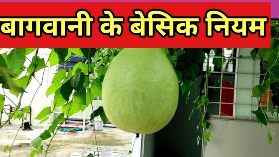 basic rules of gardening।। how we grow vegetables at home how we do terrace gardening