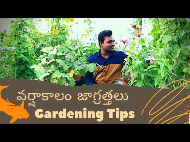 Gardening tips for rainy season వర్షాకాలం ఈ జాగ్రత్తలు పాటించండి
