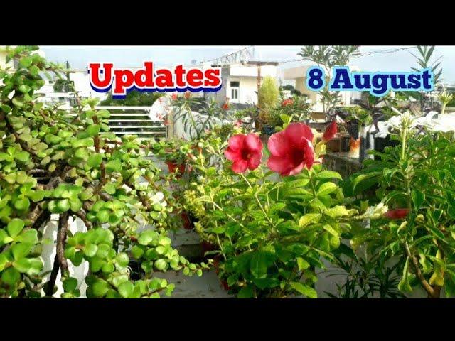My Monsoon Gardening Works Terrace Garden Flower and Indoor Plants Cutting Sunday Update