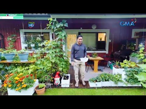 """MASAYA!!! NASA """"Pinoy MD"""" TV PO TAYO!!!! Gardening. Vegetable Gardening. Gulayan. Vegetable garden."""
