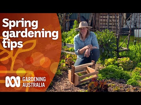 How to get the most success from your spring gardening | Gardening 101 | Gardening Australia