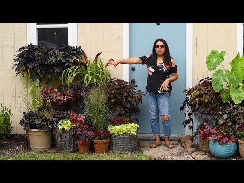 My summer garden containers ARE DONE! Fall Gardening DIY