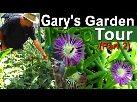 Gardening Food Easy | Garden Tour Growing Bananas in Woodchips Vertical Garden & Container Gardening