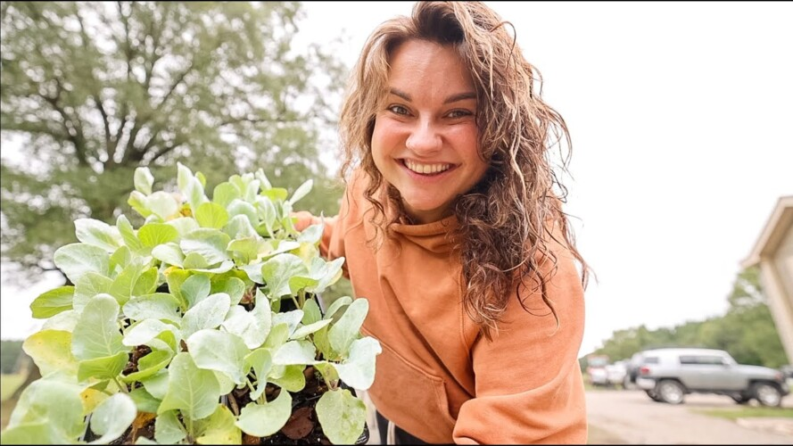 NEVER buy these started plants (and other fall gardening tips and chat) | VLOG