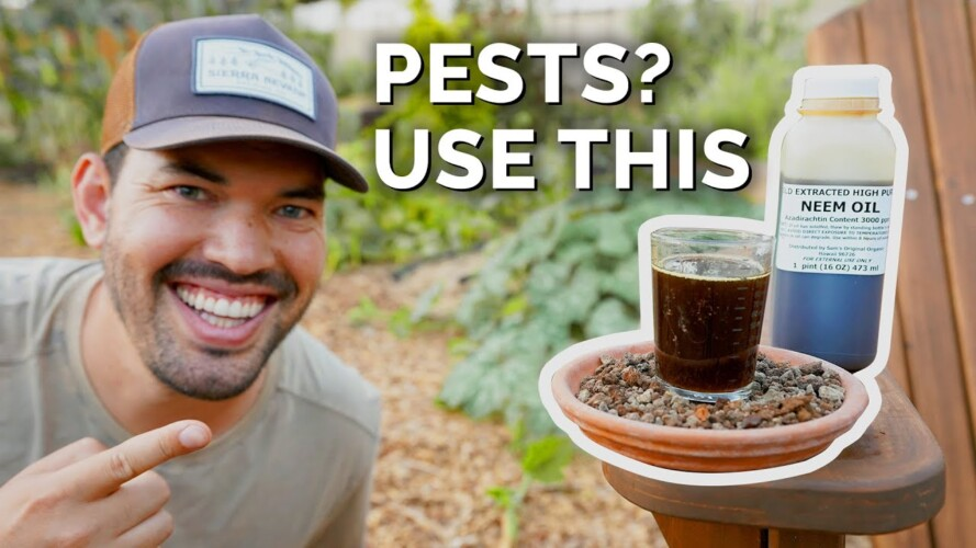 How to Use Neem Oil to Control Pests & Diseases