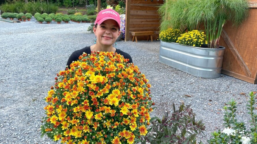 Great Plants for Fall Planting | Gardening with Creekside