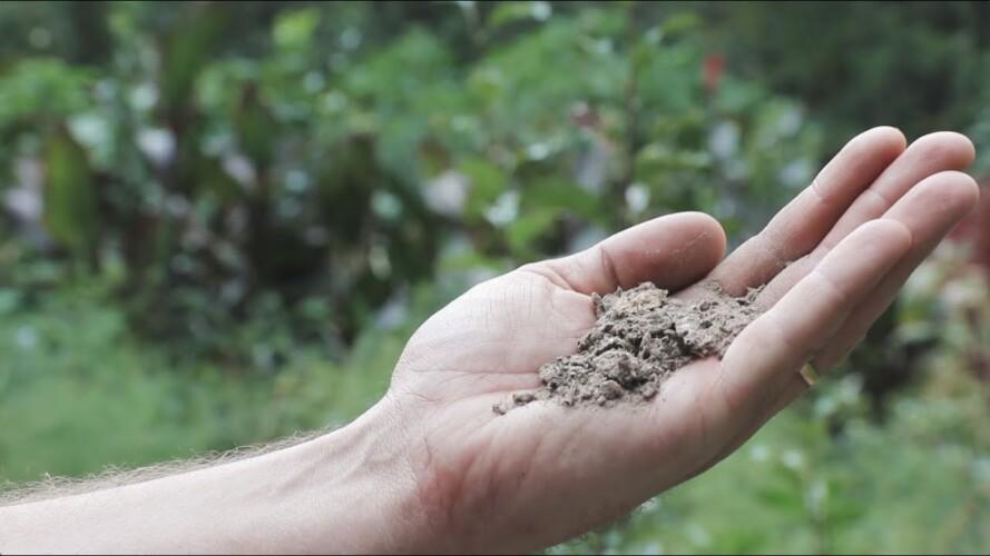 Survival Gardening Secrets (That Even Work in Lousy Dirt) - Complete Presentation