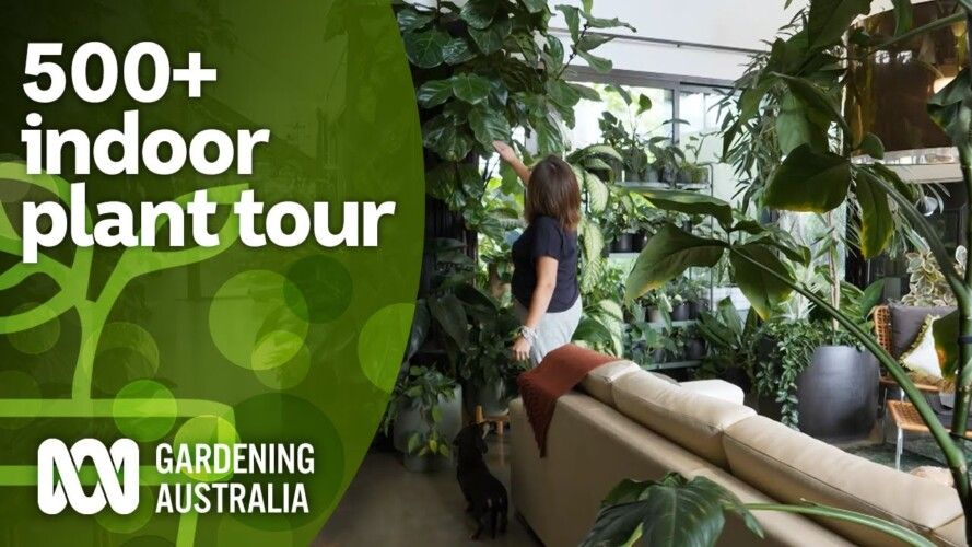 Huge 500+ indoor plant collection tour and plant care tips | Indoor plants | Gardening Australia