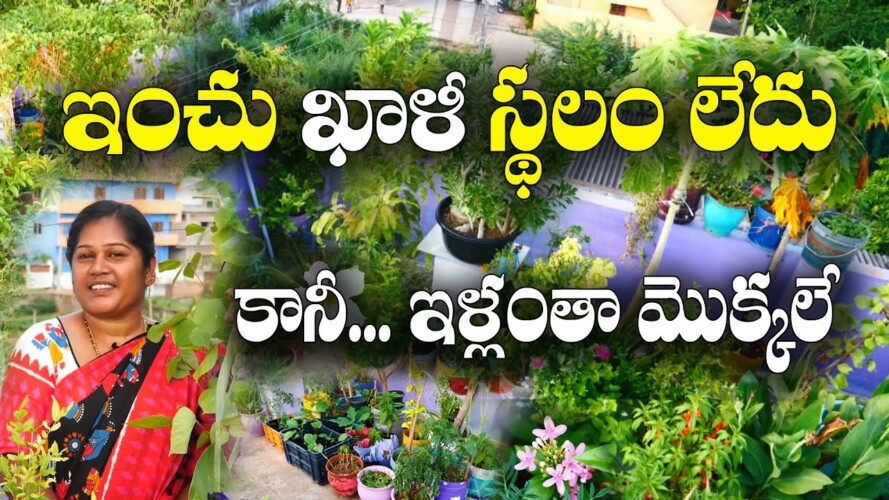 ఖాళీ స్థలం లేకున్నా.. భళా అనిపించేలా మిద్దెతోట || Terrace Gardening || Kumari || Nellore