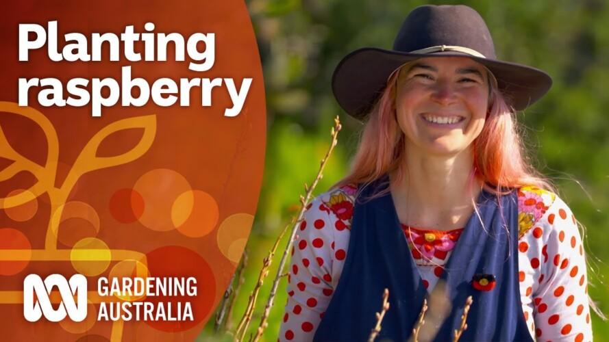 How to prepare your raspberry patch for summer | Gardening 101 | Gardening Australia