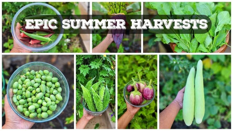 EPIC Harvests, Gardening Tips & A Lot More! - California Gardening September Garden Tour!