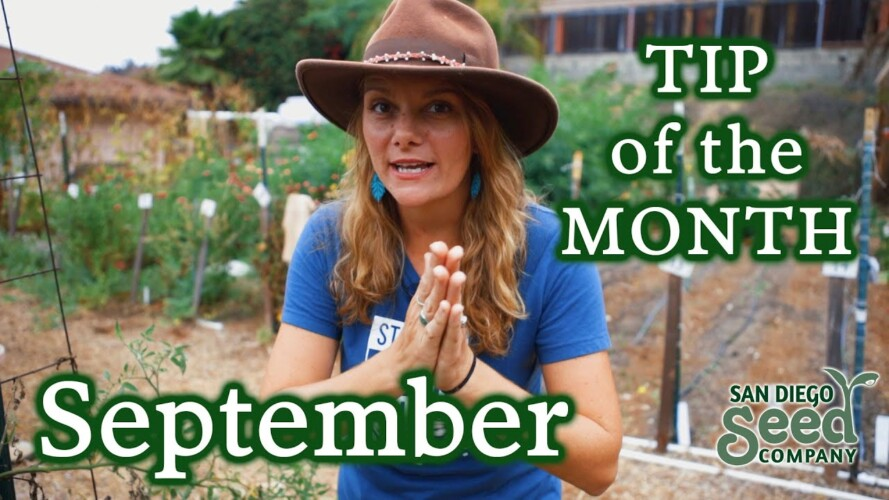 September Gardening Tip: When to Pull & When to Treat Your Plants