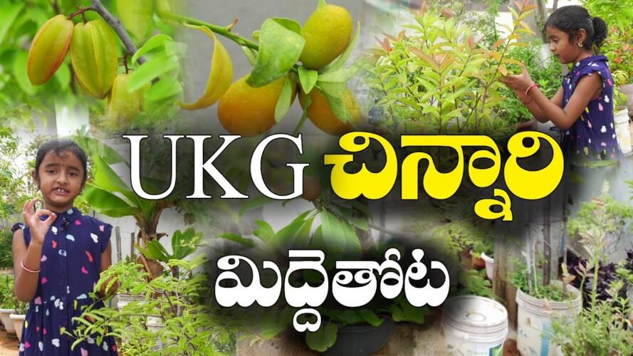 యూకేజీ చిన్నారి మిద్దెతోట ముచ్చట్లు || Terrace gardening by UKG Child || Sharmada
