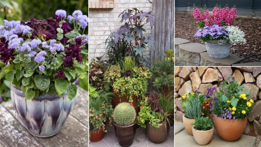 55 Container Gardening Ideas | garden design