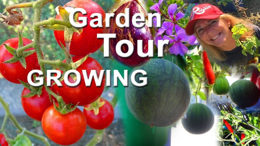 Fall Vegetable Garden Tour 🍅 Container & Vertical Gardening Tomatoes Peppers Watermelon Kale Collard