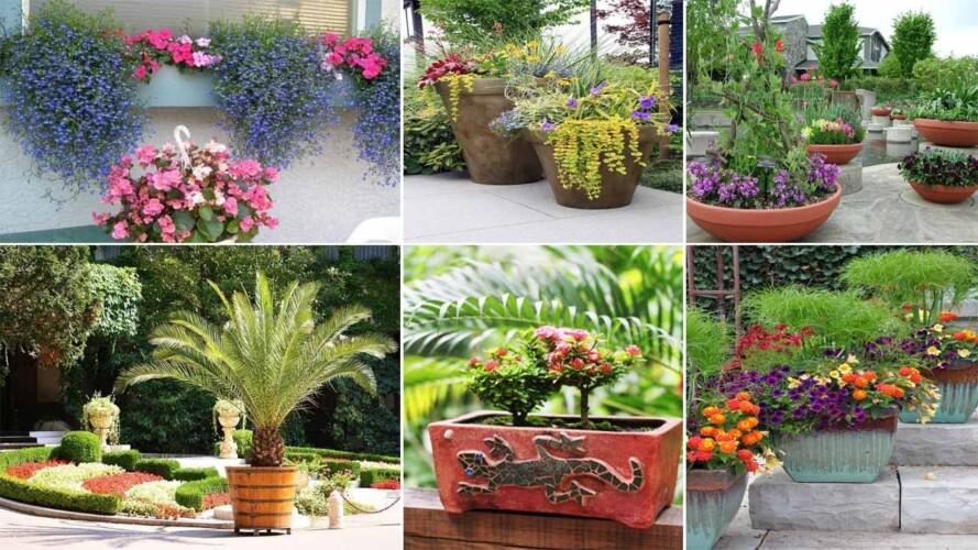 65 Container Gardening Ideas | garden ideas