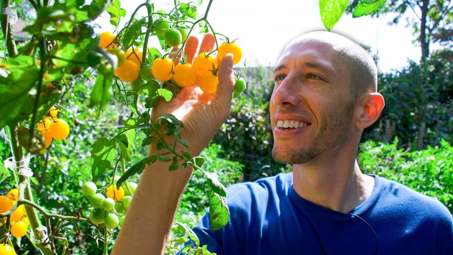 3 Incredible Secrets to Growing Tons of Food in a Tiny Garden