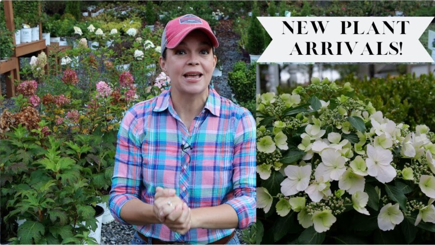 Fantastic New Plants at the Nursery | Gardening with Creekside