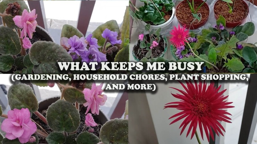 KEEPING MYSELF BUSY (Household Chores, Gardening, Plant Shopping, And More)