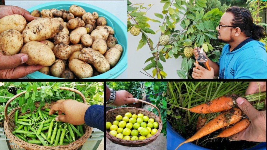 Easy Vegetables you must grow in Winters ~ October November Vegetables To Grow In Pots with updates