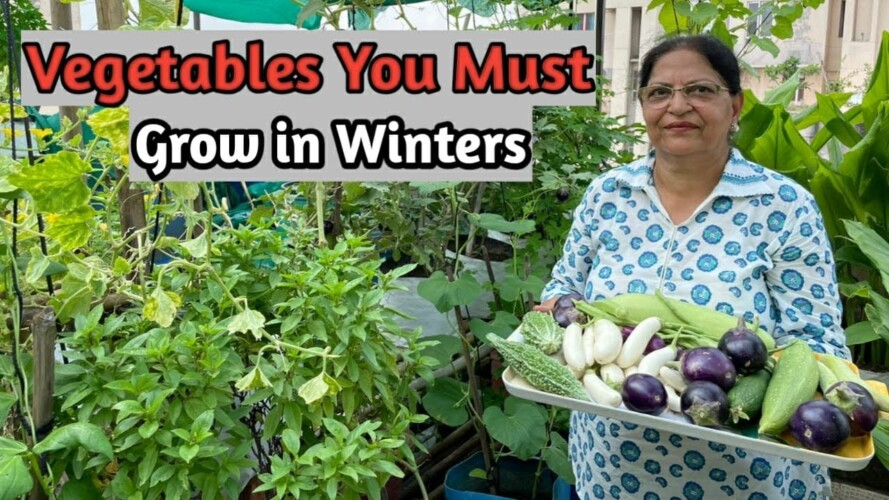 Start Prepping for WINTER GARDEN Vegetable | Roof Gardening Terrace Gardening